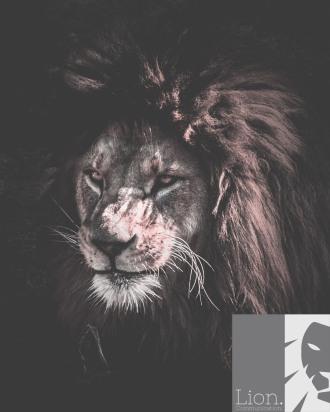 africa-angry-animal-1106452
